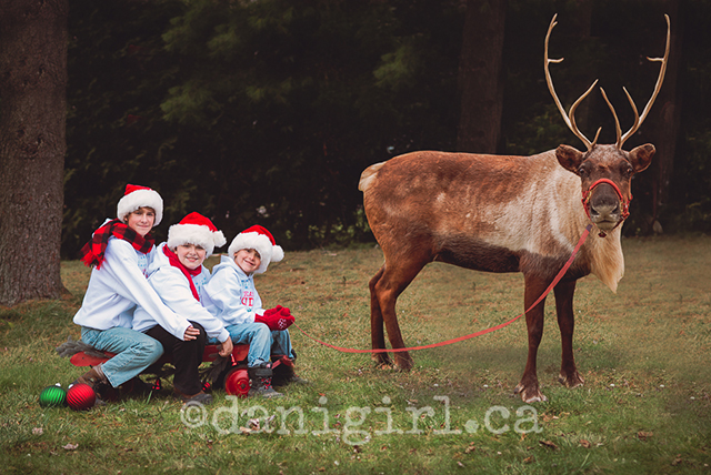 Photo of three boys and a reindeer