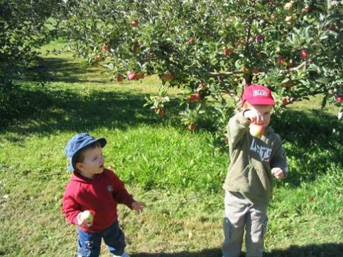 Tristan and Simon, apple-picking in 2005!!